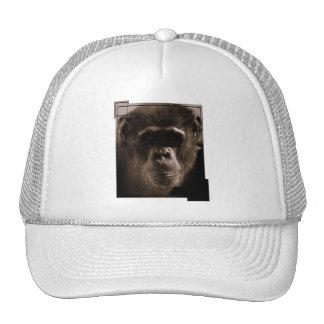Chimp Baseball Hat