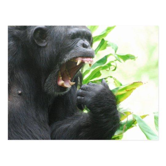 Chimp Fangs Postcard