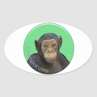 Chimp Oval Sticker