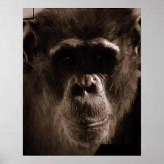 Chimp Poster Print