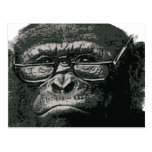Chimp Reading Post Card