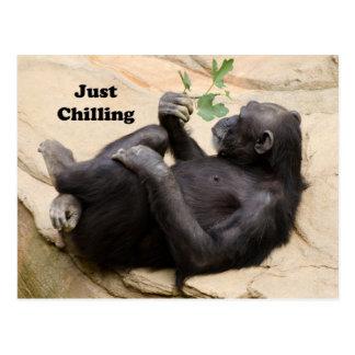 Chimp Relaxing Postcard