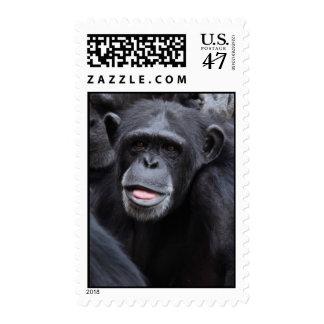 Chimp Stamp