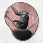 Chimpancé 001