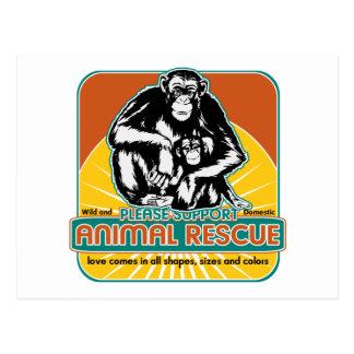 Chimpancé animal del rescate postales