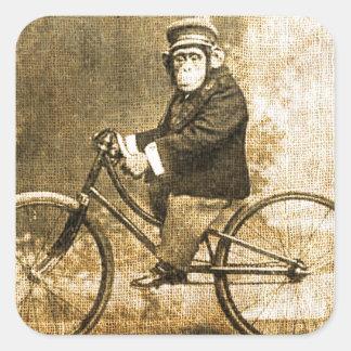 Chimpancé del vintage en una bicicleta colcomanias cuadradas