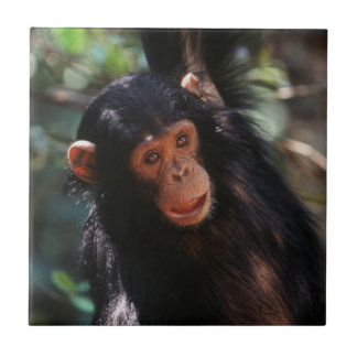 Chimpancé joven que cuelga en el bosque tejas  cerámicas