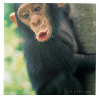 Chimpancé joven (trogloditas de la cacerola) tejas  ceramicas