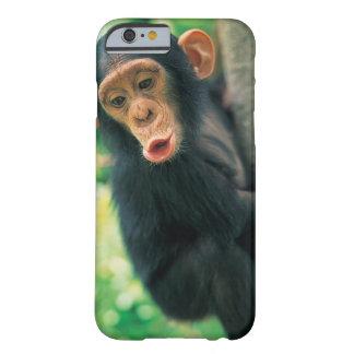 Chimpancé joven (trogloditas de la cacerola) funda de iPhone 6 barely there