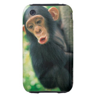 Chimpancé joven (trogloditas de la cacerola) iPhone 3 tough fundas