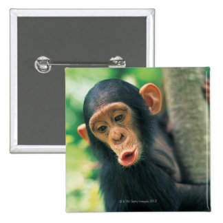Chimpancé joven (trogloditas de la cacerola) pin