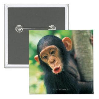 Chimpancé joven (trogloditas de la cacerola) pin cuadrada 5 cm