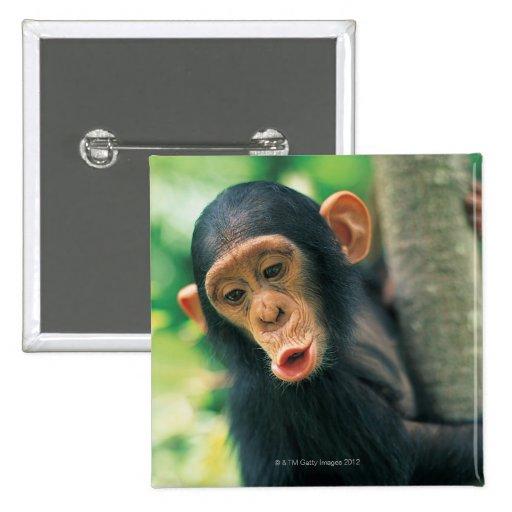 Chimpancé joven (trogloditas de la cacerola) pin cuadrado