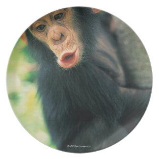 Chimpancé joven (trogloditas de la cacerola) platos de comidas