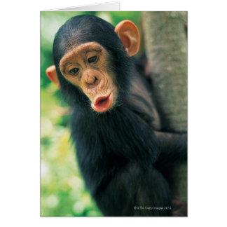 Chimpancé joven (trogloditas de la cacerola) tarjeta de felicitación