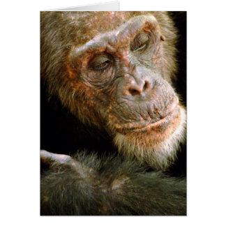 Chimpancé masculino viejo salvaje (trogloditas de tarjeta de felicitación