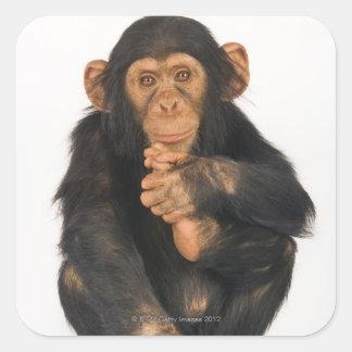 Chimpancé (trogloditas de la cacerola) pegatina cuadrada