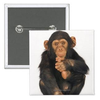 Chimpancé (trogloditas de la cacerola) pin cuadrada 5 cm