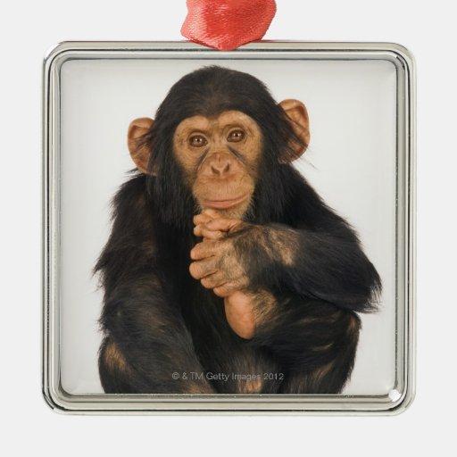 Chimpancé (trogloditas de la cacerola). Playfull Adorno De Navidad