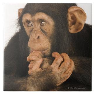 Chimpancé (trogloditas de la cacerola). Playfull j Teja Ceramica