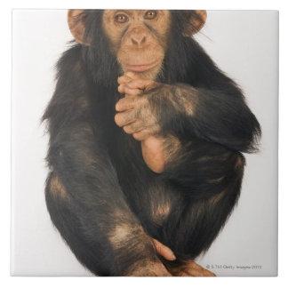 Chimpancé (trogloditas de la cacerola). Playfull j Teja