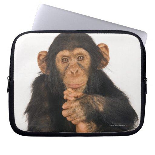 Chimpancé (trogloditas de la cacerola). Playfull j Mangas Computadora