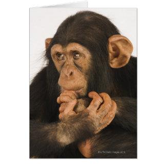 Chimpancé (trogloditas de la cacerola). Playfull j Tarjeta De Felicitación