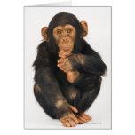 Chimpancé (trogloditas de la cacerola) tarjetas