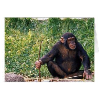 Chimpancé usando el palillo como herramienta a obt tarjeta de felicitación