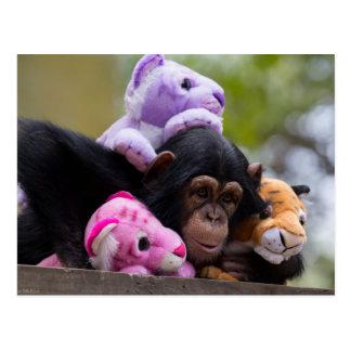 Chimpancé y amigos mimosos tarjetas postales