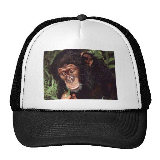 Chimpansee Gorro