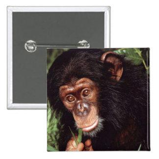 Chimpansee Pin Cuadrado