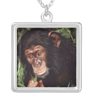 Chimpansee Silver Plated Necklace