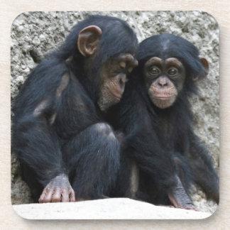 Chimpanzee002 Coasters