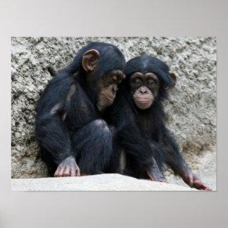 Chimpanzee002 Póster