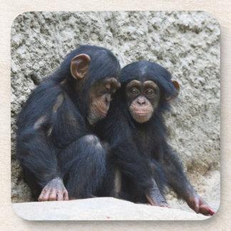 Chimpanzee 002 coaster