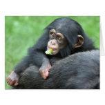 Chimpanzee 005 card
