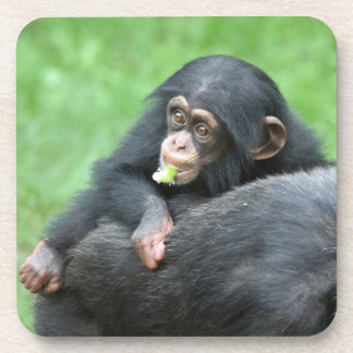 Chimpanzee 005 coasters