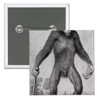 Chimpanzee, 1699 pinback button