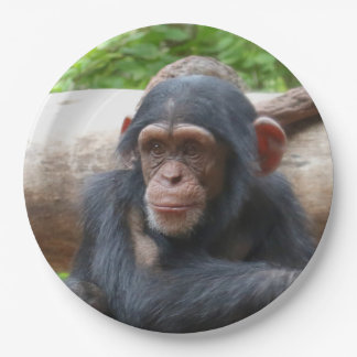 Chimpanzee_2015_0504 Paper Plate