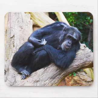 Chimpanzee at rest mouse pad