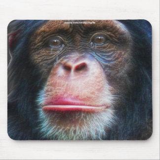 Chimpanzee Conservation Wildlife Art  Mousepad