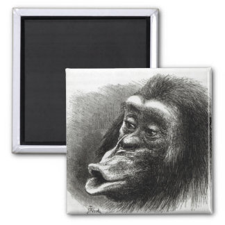 Chimpanzee Disappointed and Sulky 2 Inch Square Magnet