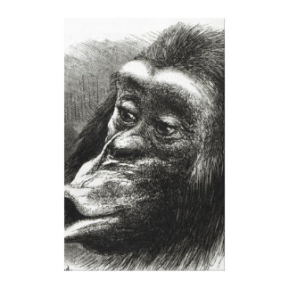 Chimpanzee Disappointed and Sulky Canvas Print