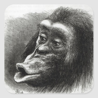 Chimpanzee Disappointed and Sulky Square Sticker