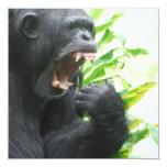 """Chimpanzee Fangs Invitations 5.25"""" Square Invitation Card"""
