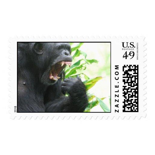 Chimpanzee Fangs Postage Stamp