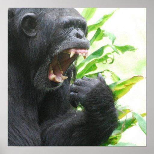 Chimpanzee Fangs Poster