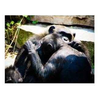 Chimpanzee hugging/grooming postcard