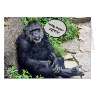 Chimpanzee Humorous Birthday Card